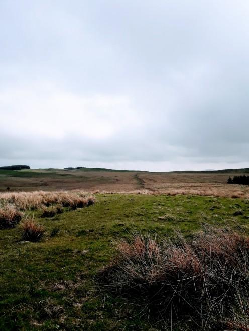 Moss Moor